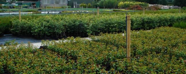 Surplus second quality plants