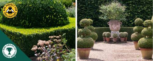 Box Topiary in other shapes