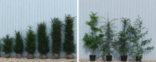 Surplus Plants