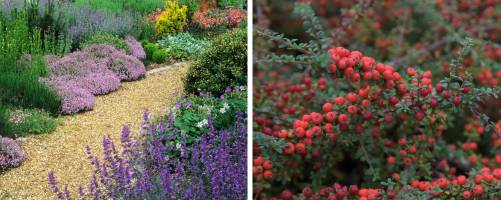 Alpines and Ground Cover