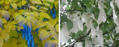 Unusual Trees and Shrubs